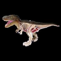 4D Master Объемная анатомическая модель Динозавр Тираннозавр