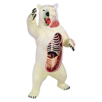 4D Master Объемная анатомическая модель Белый медведь