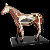 4D Master Объемная анатомическая модель Лошадь